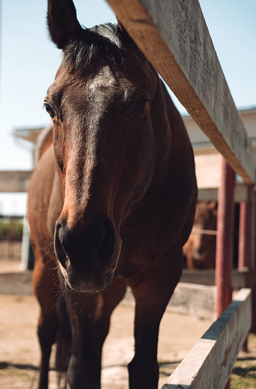 Volunteer management software for therapeutic riding centers